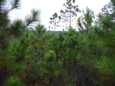 Con menos carga contaminante los pinareños defienden el medio ambiente