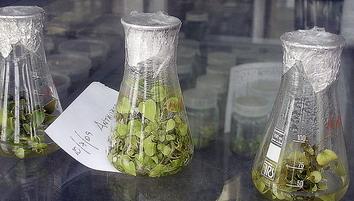 La agricultura… del jan al tubo de cristal